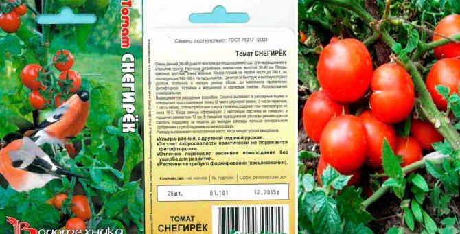 Томаты снегирь: характеристика и описание сорта, фото русский фермер