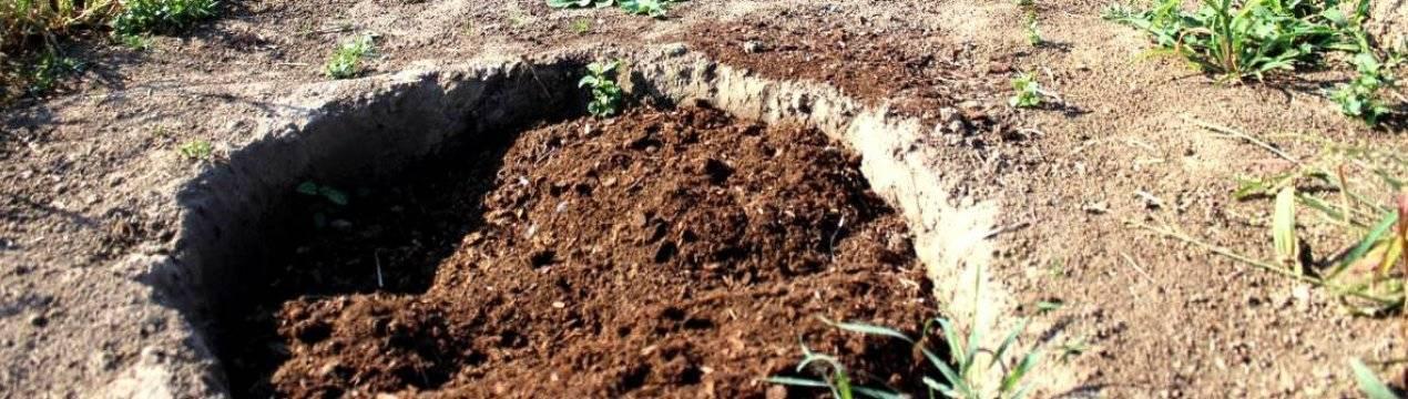 Сколько верхового кислого торфа нужно на 1 куст голубики садовой?