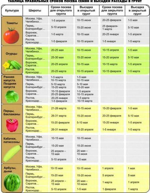 Высадка рассады перца в открытый грунт и теплицу: сроки и правила