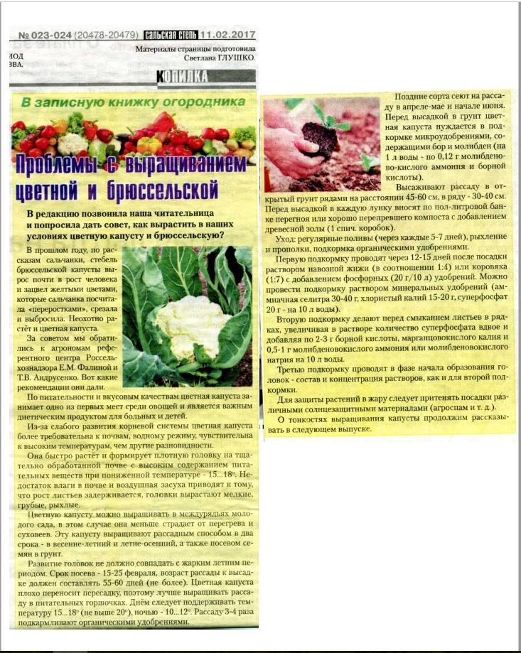 Древесная зола как удобрение - секреты применения