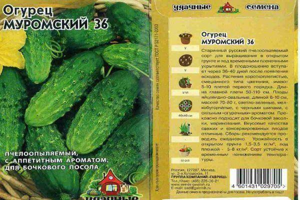 Лучшие сорта огурцов для сибири для теплиц: характеристика и описание, урожайность, отзывы и фото, особенности выращивания