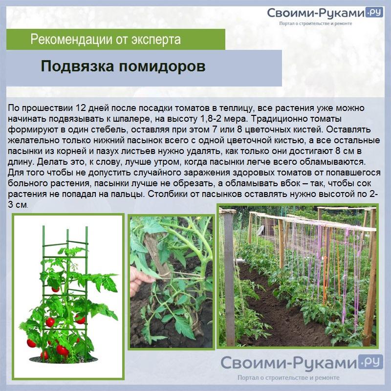 Штамбовые сорта помидоров  на supersadovnik.ru
