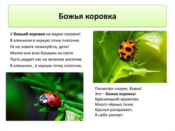 ᐉ как выращивать божьих коровок в домашних условиях? - ogorod-u-doma.ru