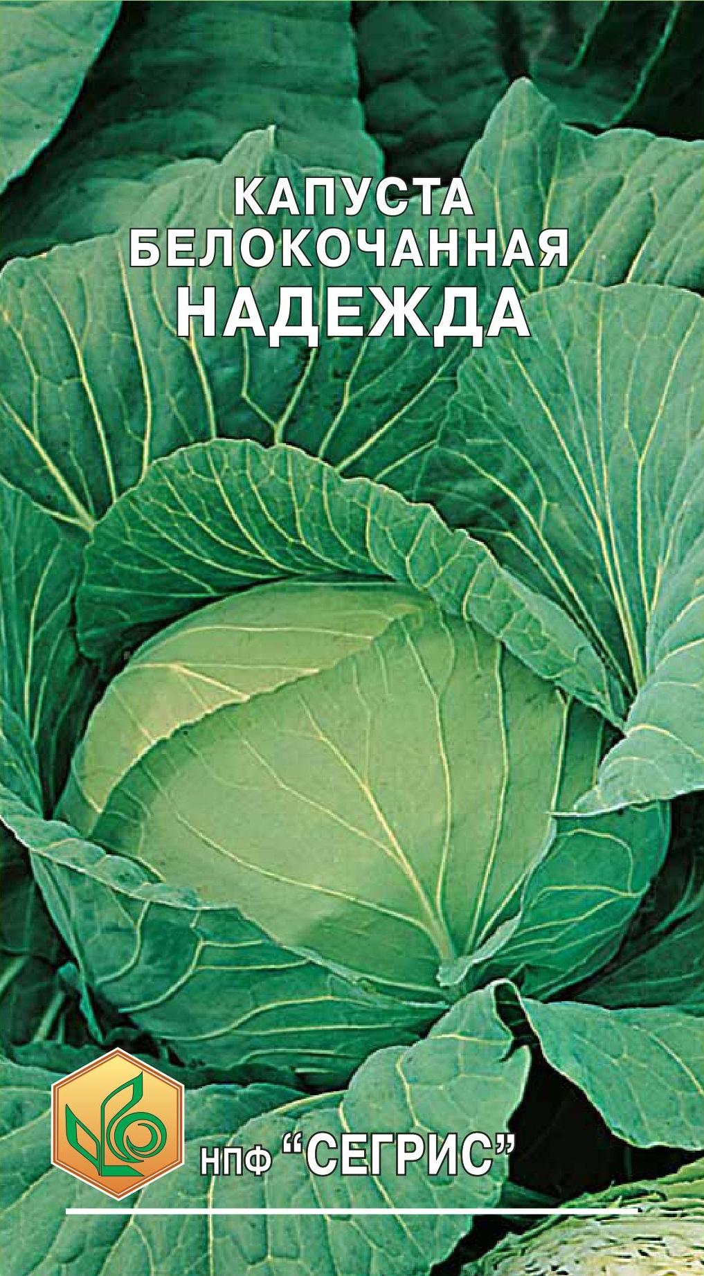 10 лучших сортов капусты