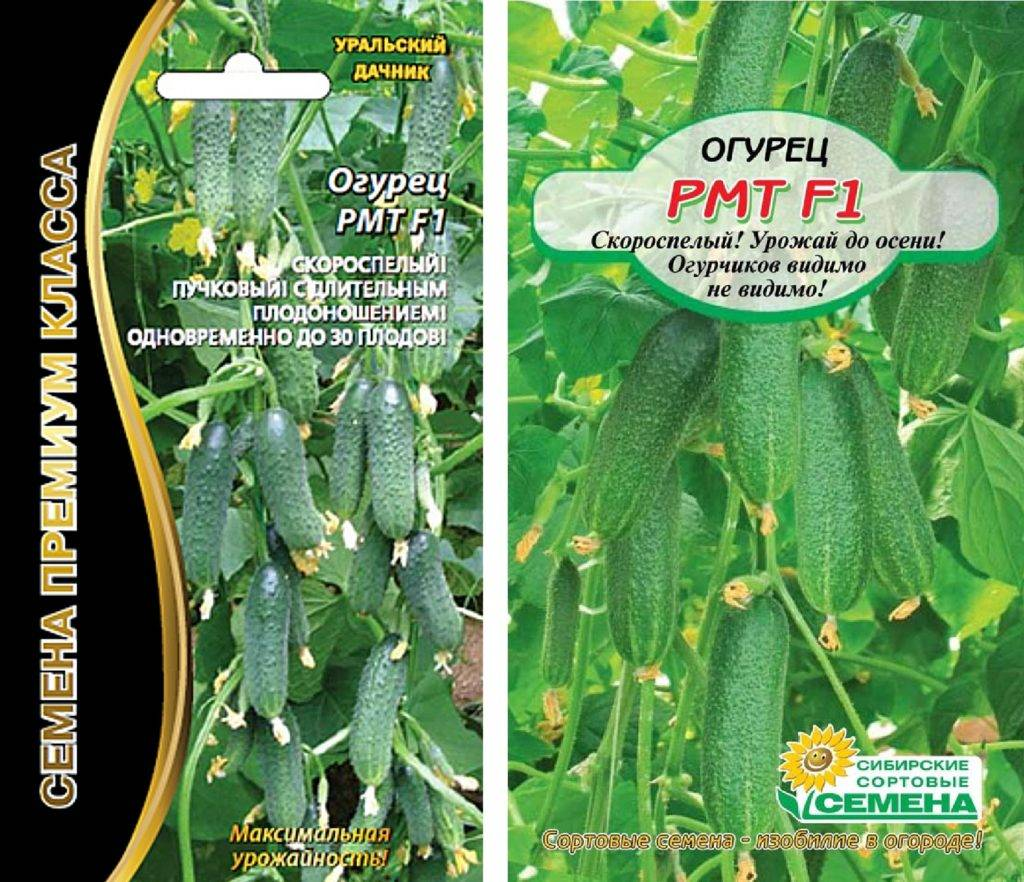 Сорта огурцов букетного типа: описание сортов, выращивание и уход