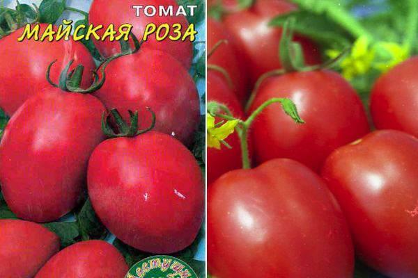 Томат красавчик f1: описание и характеристика, особенности выращивания и ухода за сортом, урожайность, фото