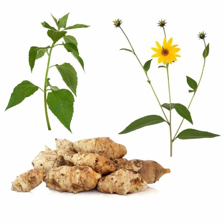 Как вывести топинамбур с огорода: можно ли избавиться от земляной груши на участке, какие методы подойдут, а также что необходимо для профилактики разрастания? русский фермер