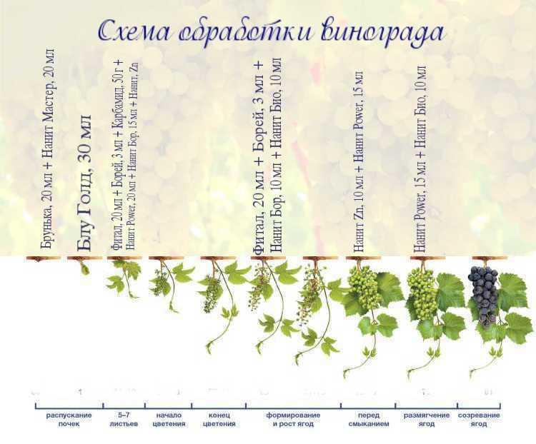 Уход за виноградом - работа на винограднике