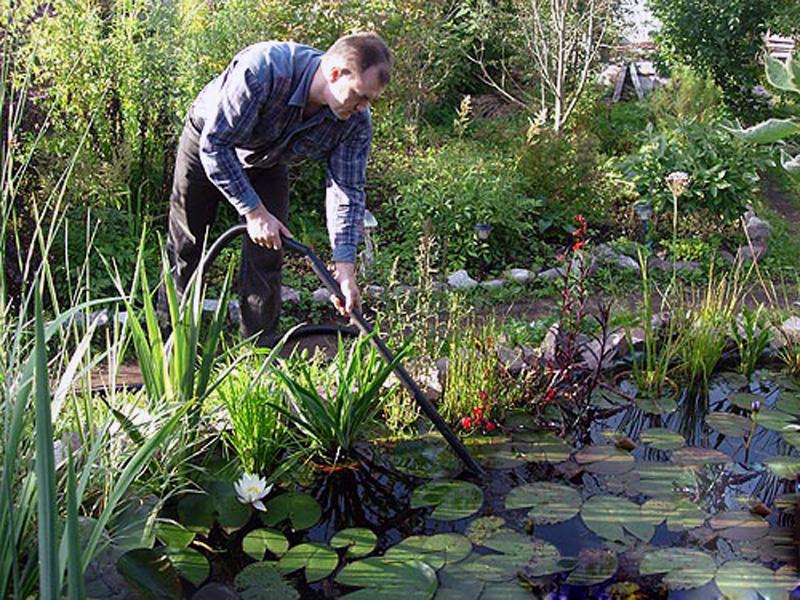Подготовка декоративного пруда к зиме   мир садоводства