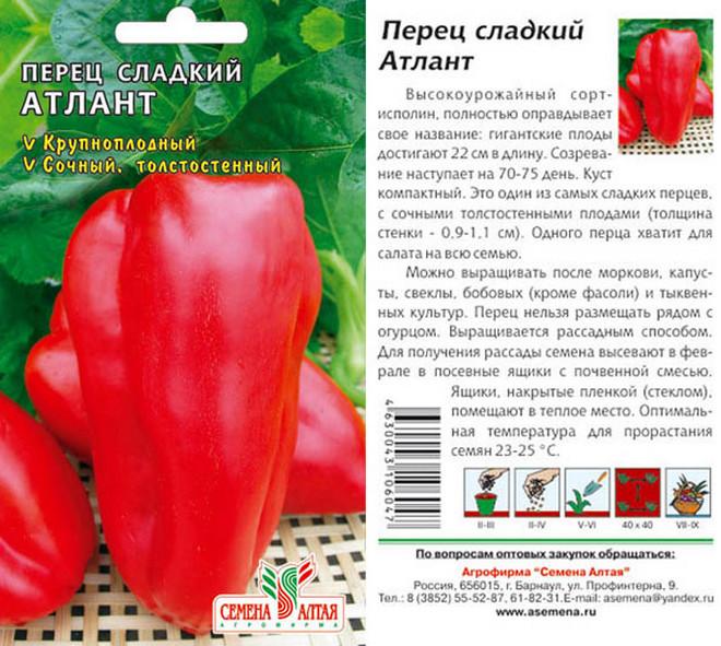 Перец «атлант»: характеристика и описание сорта, отзывы, урожайность, фото на кусте
