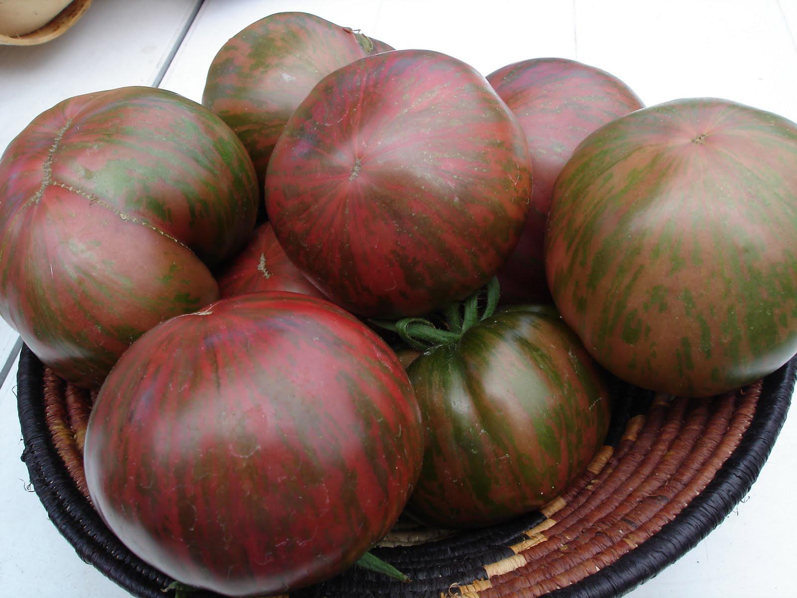✅ томат беркли тай дай хаат описание сорта - питомник46.рф