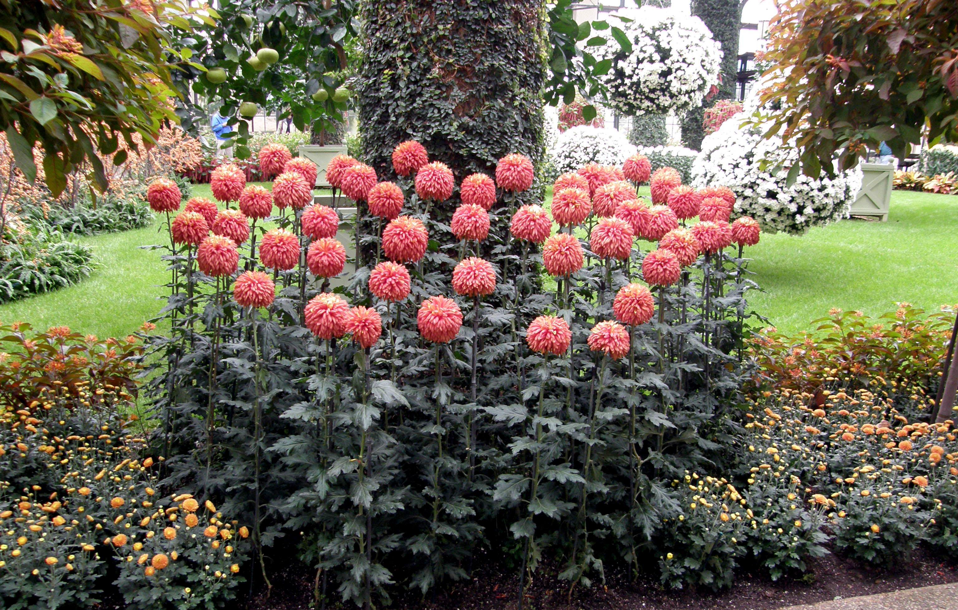 Какие цветы хорошо растут на урале? неприхотливые многолетние цветы