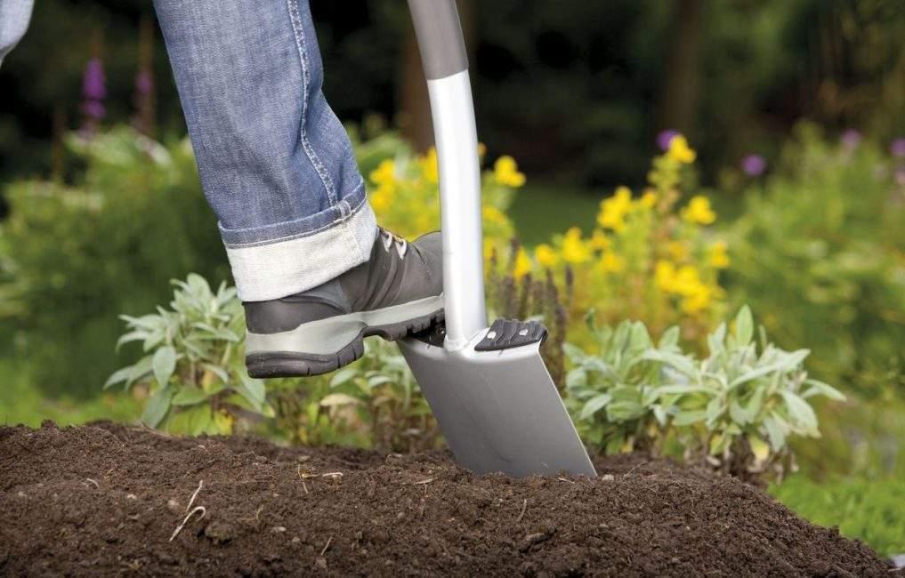 Выращивание хрена в домашних условиях