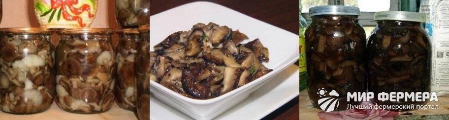 Как солить и мариновать свинушки на зиму горячим и холодным способом: лучшие рецепты приготовления. засолка свинушек с чесноком, укропом, корицей, луком, в масле: простой и вкусный рецепт