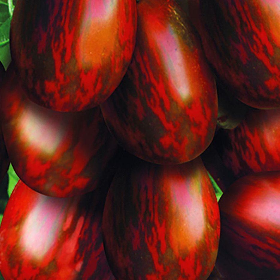 Томат красный финик характеристика и описание сорта