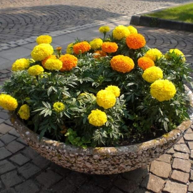 Инструкция как оформить клумбу: пошаговое описание создания цветочной клумбы