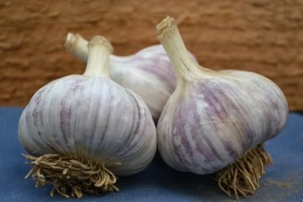 Как выбрать лучший сорт озимого чеснока для выращивания?