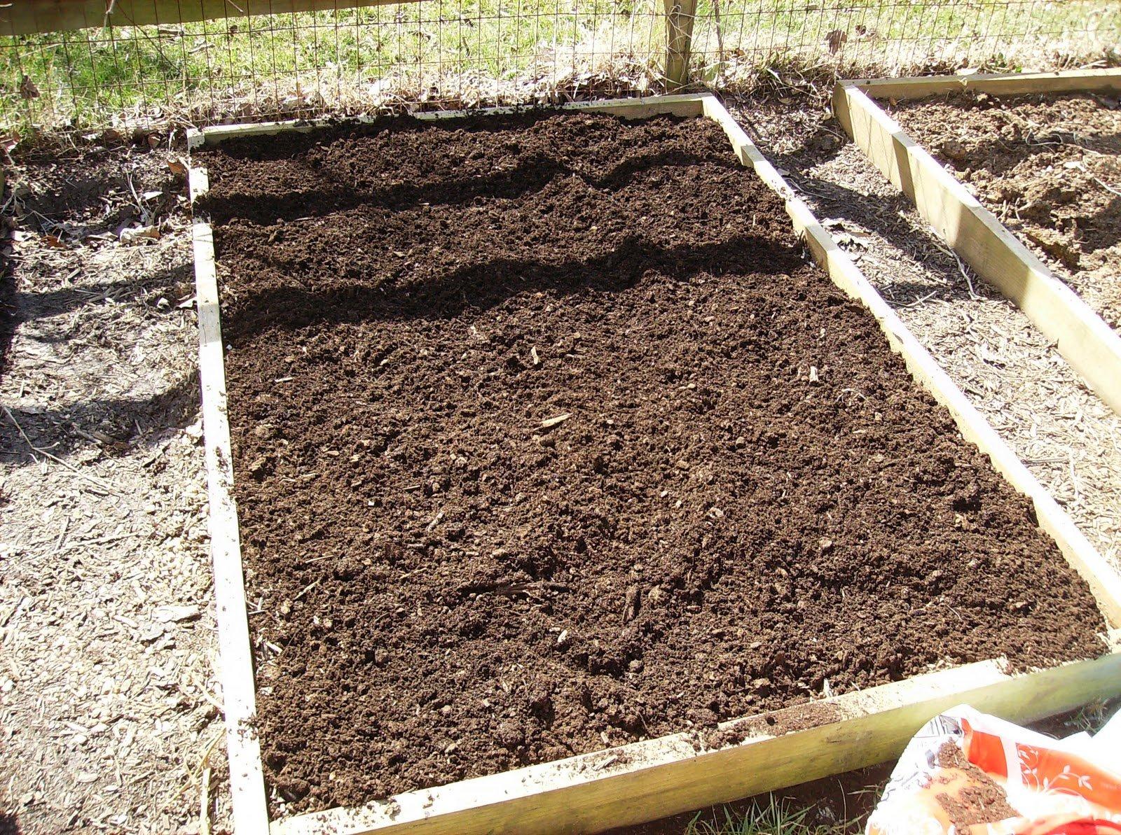 Выращивание базилика в открытом грунте: как и когда сажать, посадка и уход