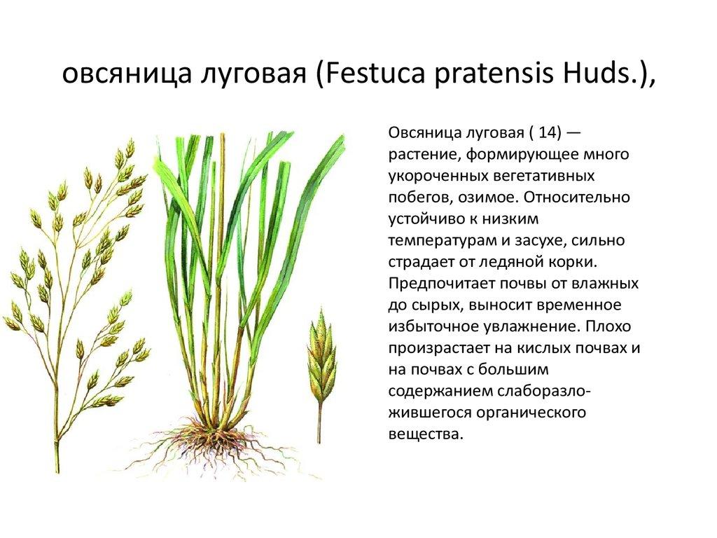Газонная трава для ленивых