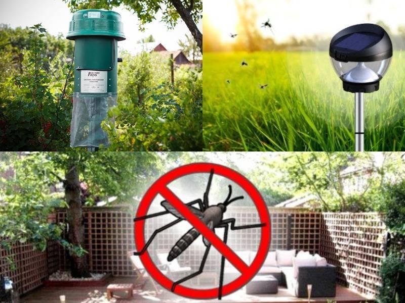 Как избавиться от назойливых пчел на своем участке: наиболее эффективные способы