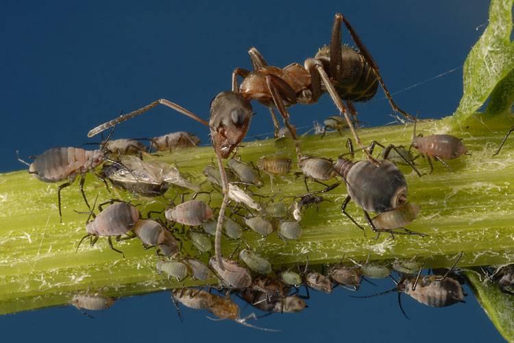 Как избавиться от муравьев на участке: народные рецепты: новости, муравьи, сад, огород, советы, лайфхаки, сад и огород