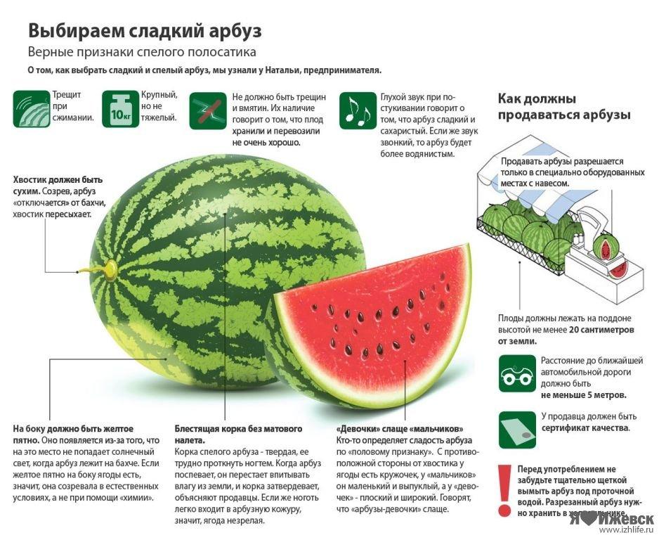 Арбуз сахарный малыш: описание и характеристики сорта, выращивание в открытом грунте, отзывы