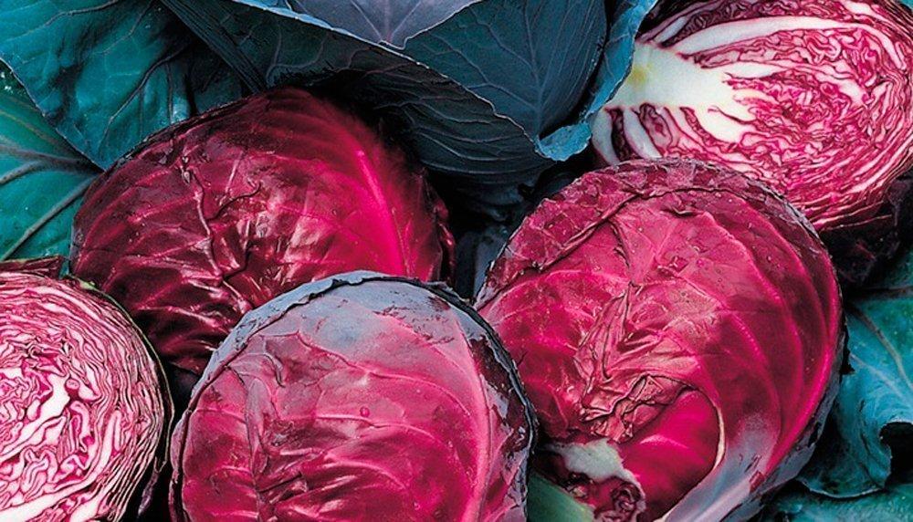 Цветная капуста: выращивание на огороде, сорта