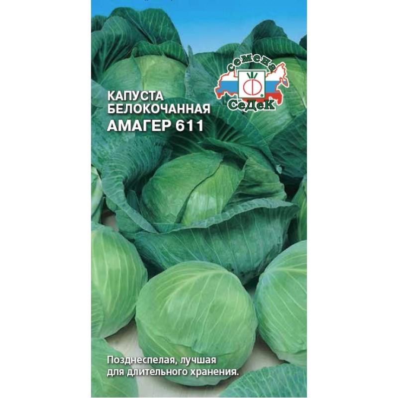 Капуста амагер 611: отзывы о выращивании, описание сорта и характеристика, когда сажать рассаду, фото