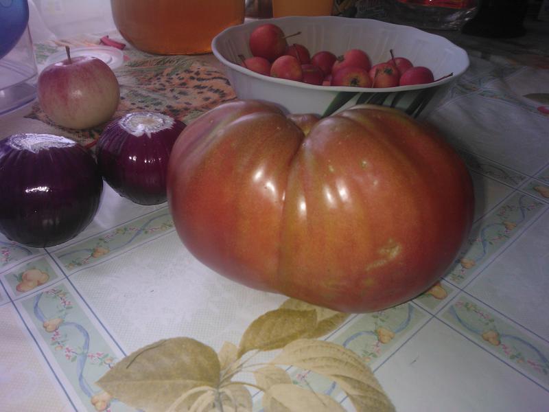 Сорта черных томатов с описанием и фото для открытого грунта и теплицы
