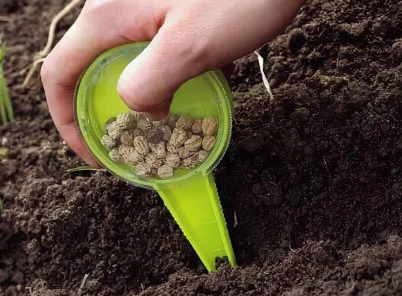 Когда сажать горох весной. выращивание, посадка и уход в открытом грунте