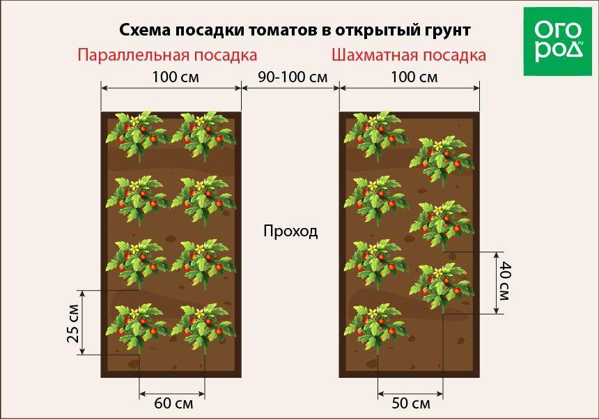 Расстояние между огурцами при посадке