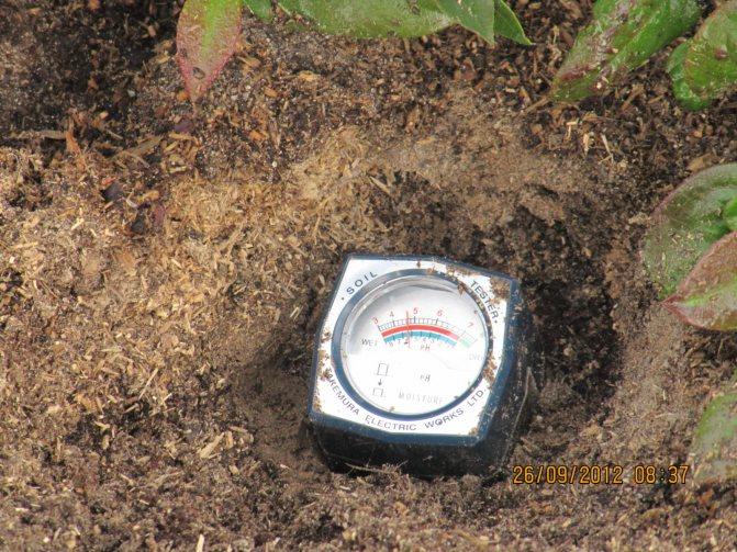 Почва для голубики садовой: какой состав нужен и как сделать своими руками |