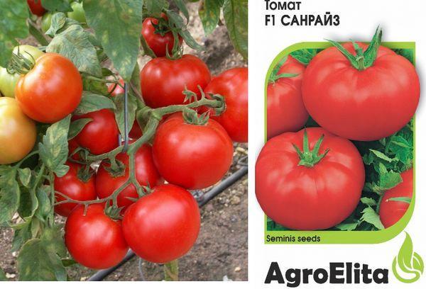 Характеристика и описание гибрида томат «санрайз f1» на основании отзывов и фото садоводов