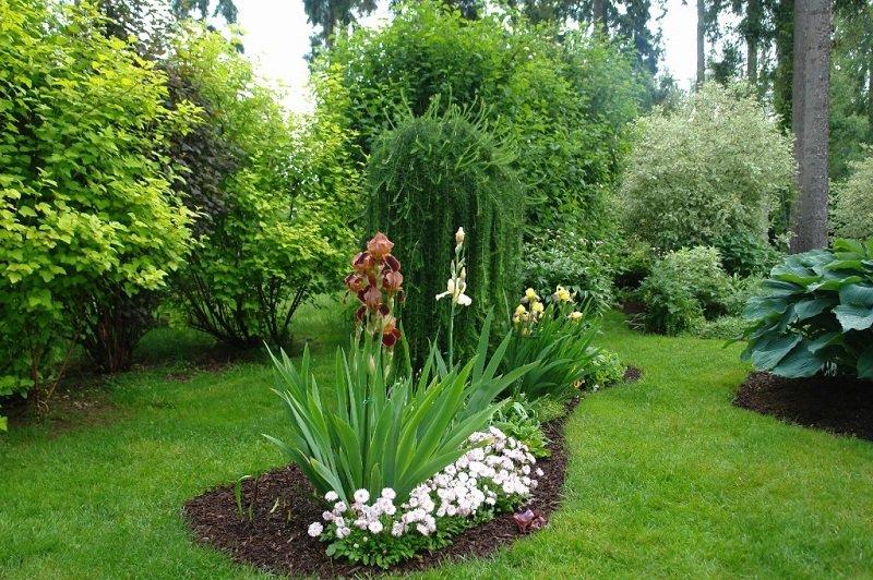 С какими цветами на клумбе сочетаются ирисы, с чем посадить рядом