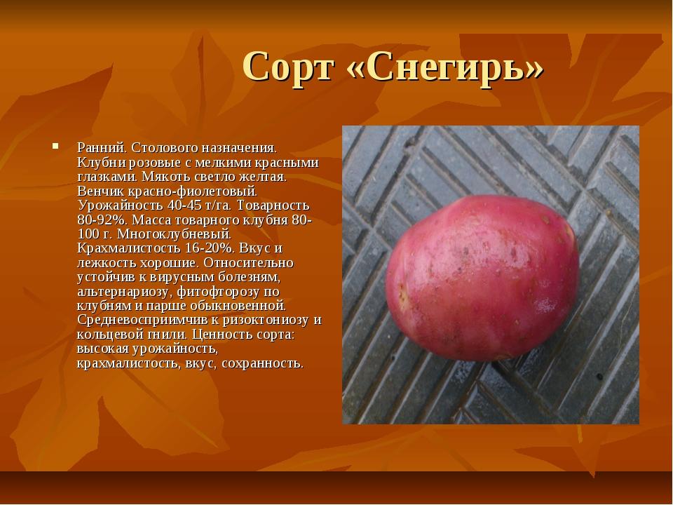 Томат «снегирь»: описание сорта, характеристика урожайности и агротехника посадки, уход и выращивание помидоров (фото)