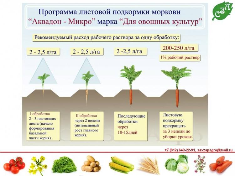 Чем подкормить морковь для сладости: от чего зависит вкус овоща и какими удобрениями стоит полить культуру, чтобы она была сахаристее и лучше росла? русский фермер