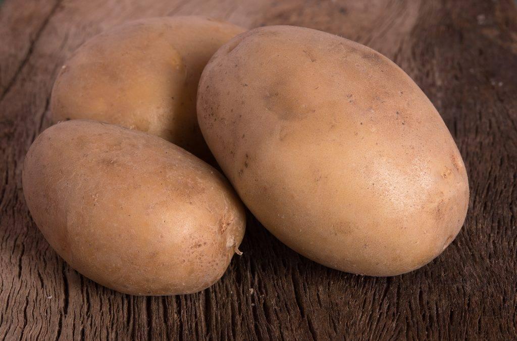 Картофель вектор: описание и характеристики сорта, посадка и уход, отзывы с фото