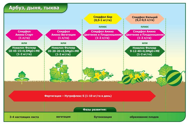 Как часто нужно поливать арбузы в открытом грунте, правила и сроки