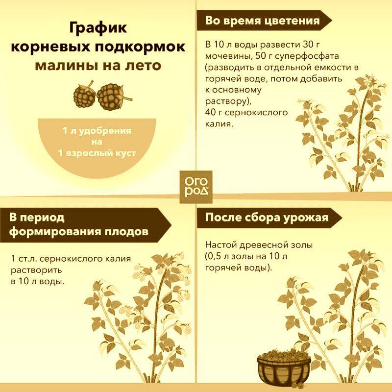Чем подкормить тыкву в открытом грунте во время цветения и плодоношения