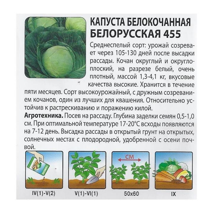 Капуста белорусская 455: описание, урожайность сорта, отзывы