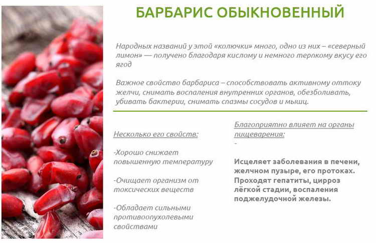 Барбарис полезные свойства и противопоказания, применение, химический состав
