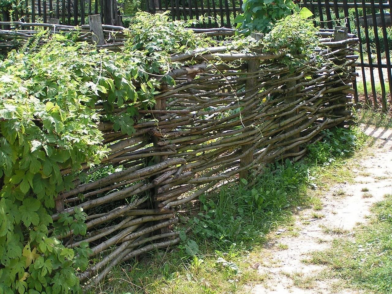 Плетеный забор (44 фото): австрийская плетенка из досок и пвх, декоративные деревянные ворота-плетень из ивы и дерева