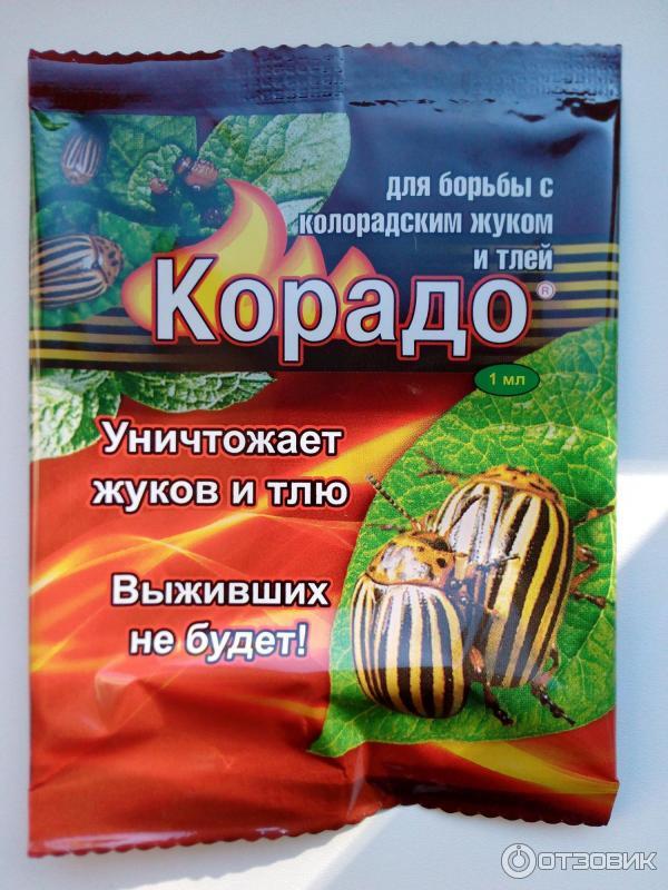 Корадо от колорадского жука: инструкция по применению и область действия