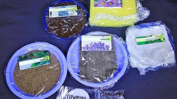 Стратификация семян— полезный и легкий агроприем