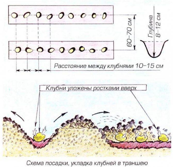 ᐉ схемы посадки картофеля – расстояния между рядами и ямками - roza-zanoza.ru