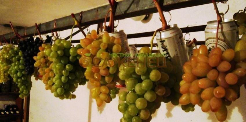 Как сохранить виноград зимой. как сохранить виноград в домашних условиях | дачная жизнь