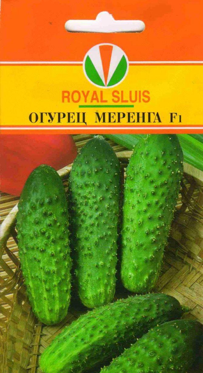 Огурцы меренга f1: описание сорта, выращивание, отзывы