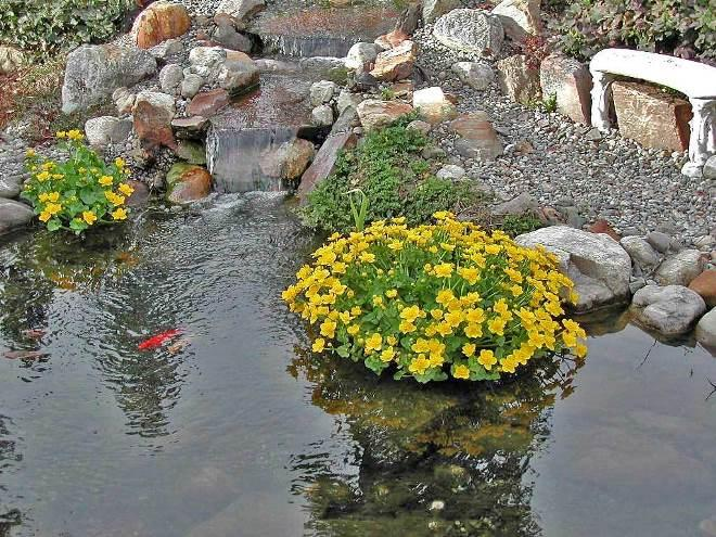 Искусственный водоем на участке. как сделать пруд своими руками