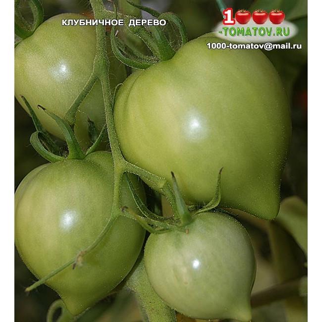 Томат немецкая красная клубника описание сорта, достоинства и недостатки, особенности выращивания русский фермер