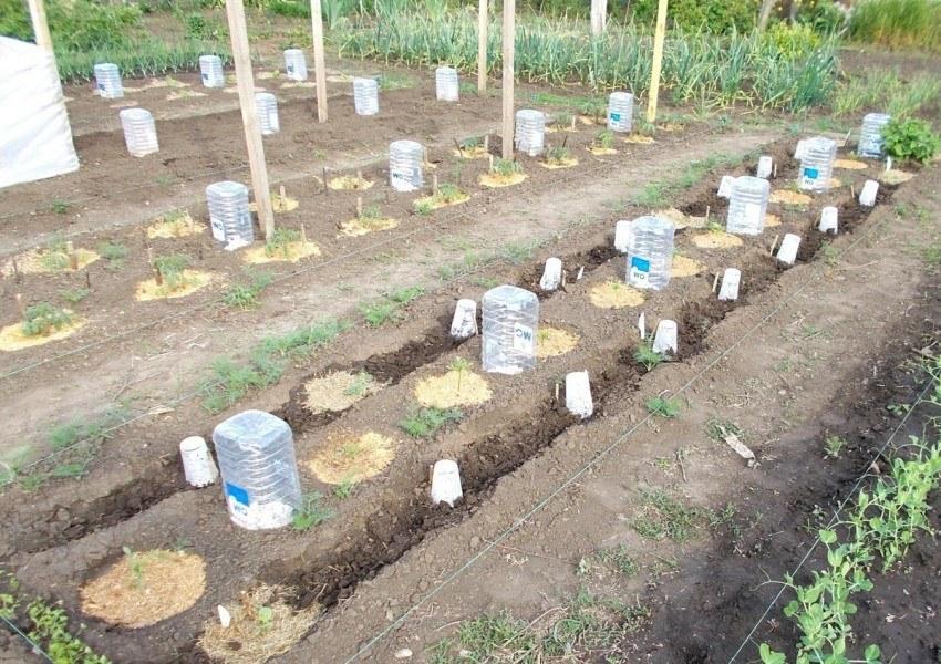 Капельная система полива огурцов своими руками: как сделать, сколько воды нужно огурцам, как правильно поливать